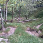 Pot: Kamniška Bistrica – Presedljaj – Korošica