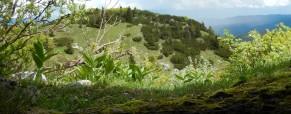 Vabilo: Izlet na Soriško planino