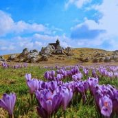 Fotografska razstava Janeza Medveška na Mali planini