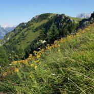 Vodeni pohodi na Dan domžalskih planincev