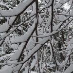 mo_pdd-izleti-zimsko_pohorje_jan_19-foto_matej_ogorevc (47)