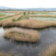 Poročilo: Škocjanski zatok