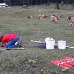 Le kaj išče sredi te kravje doline